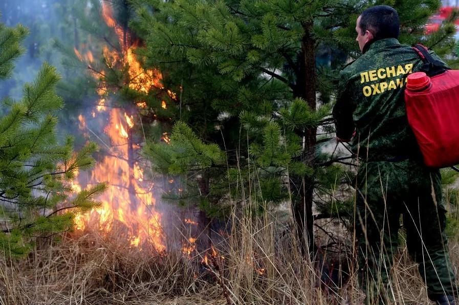 На фото мужчина с надписью на спецодежде Лесная охрана ведет борьбу с пожаром в Лесу.